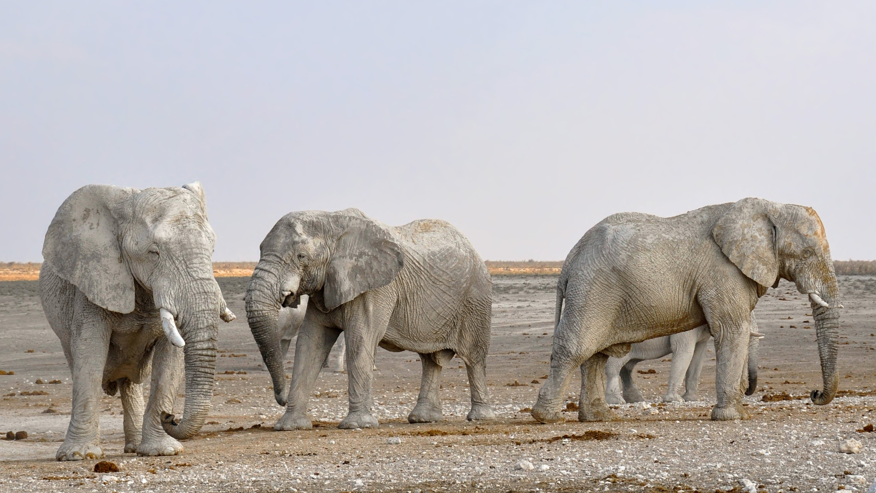 nature-adventure-animal-dry-wildlife-herd-827728-pxhere.com